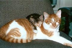 Sir Biggles and Lady Yumyum (kevin63) Tags: cats cute yumyum tomcat lightner biggles catandkitten