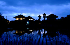 Bali :: Penestanan (Sam Rohn - 360 Photography) Tags: blue sunset bali reflection silhouette indonesia twilight asia dusk ricepaddy magichour ubud locationscout penestanan nylocations samrohn lesamisdupetitprince