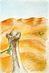 Postcard Sahara Desert