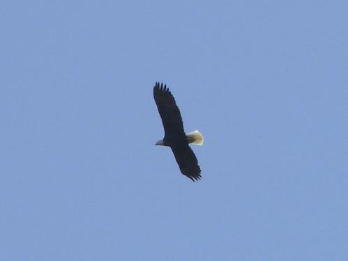 eagle backpack olympic peninsula