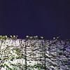 deep blue back (F_blue) Tags: tokyo kodak hasselblad portra400vc 500cm uenozoo 上野動物園 planart c8028 fblue2008