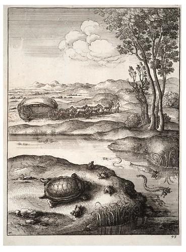 11- La tortuga y las ranas
