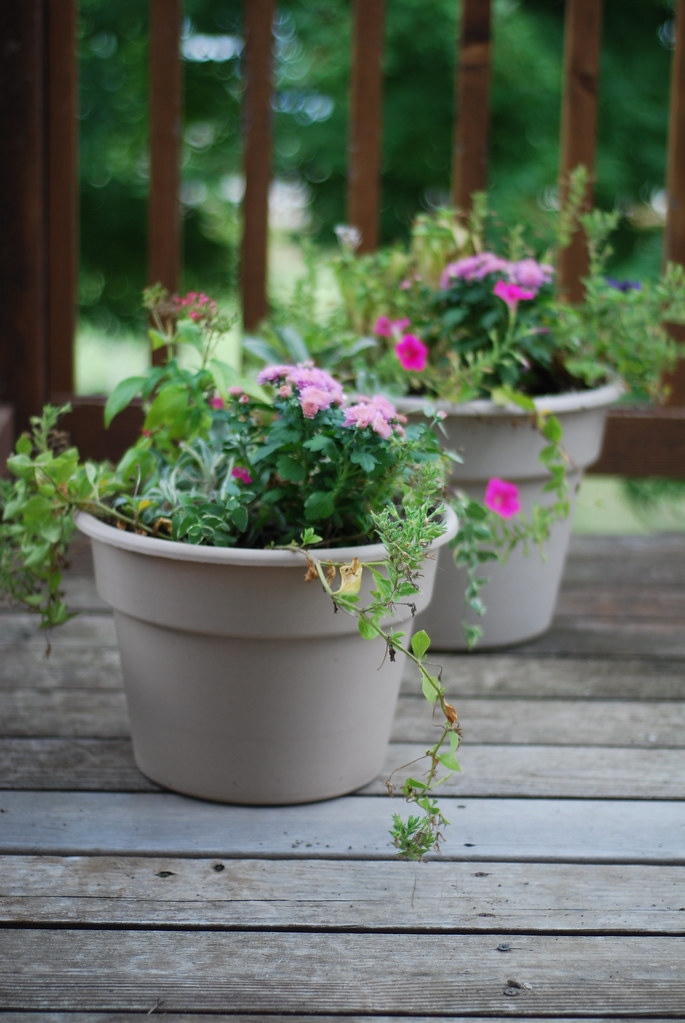 Flower Pots Freshened up for Fall