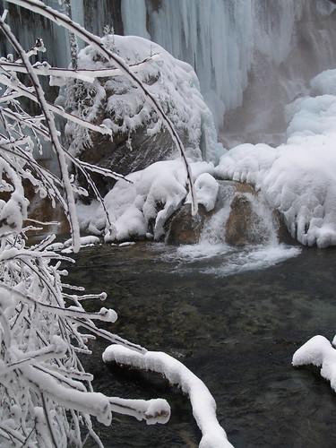 樹上的冰掛