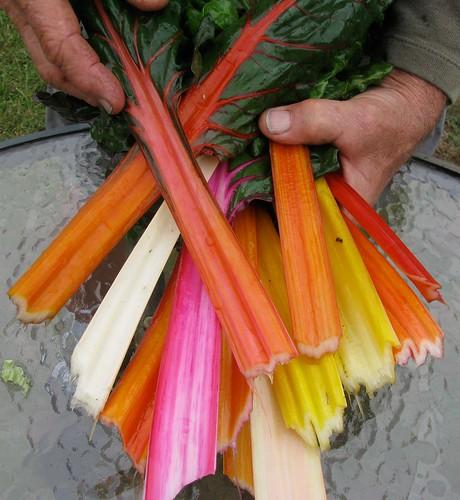 rainbowchard