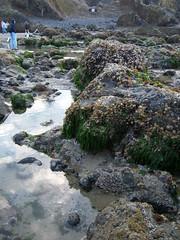 Haystack Rock Tide Pools - PM (mishakitty78) Tags: ocean beach oregon pacific pacificocean haystackrock seashore tidepools tidepool tidal tides canonbeach shorelife