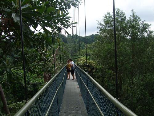 HSBC Tree-Top Walk at MacRitchie Reservoir por Eustaquio Santimano.