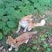 20080914 - cats visit our creek - 168-6822 - Oranjello - reflecting back, Lemonjello - looking forward