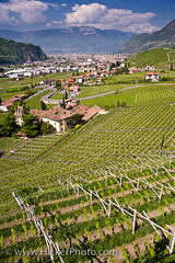 View of wineyards near Bozen in South Tirol Italy (Rolf Hicker Photography) Tags: travel italy tourism europe vineyards bozen southtirol anawesomeshot
