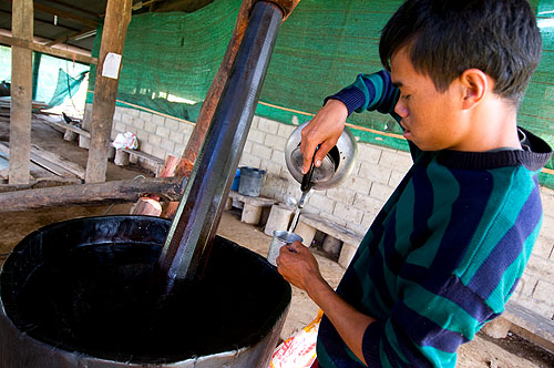 Preparing to make sesame oil, Pang Muu, Mae Hong Son, Thailand