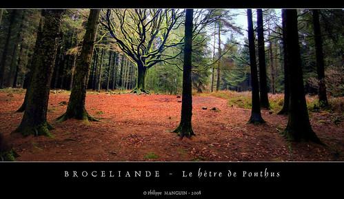 Broceliande - le hêtre de Ponthus (2)