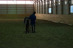 Lateral Work (janred) Tags: dressage carriagedriving breezie longreining chalamet ericchalamet