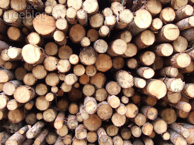 extracted timber