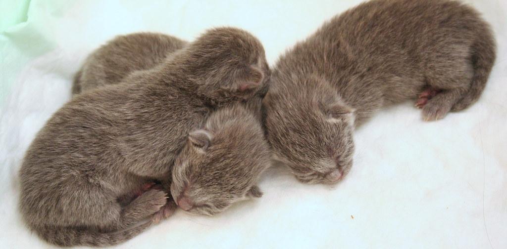 Kittens of Pegusha 3134660965_eb9e7d0ab6_b