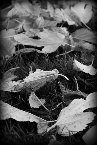b & w leaves fallen