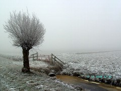 White Tree (Davydutchy) Tags: winter cold holland ice netherlands field fog fence frost hiver nederland newyearseve friesland frysln oudjaarsdag vogonpoetry vogoncentum