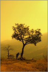 And it was all yellow.... (flickrohit) Tags: woman dog india man tree yellow trek child fort maharashtra rohit torana rohitgowaikar