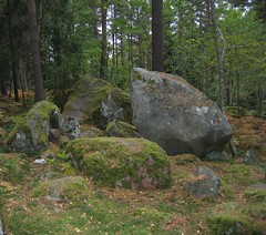2005.9.20 020 (catarina.berg) Tags: wood forest moss stoneblocks