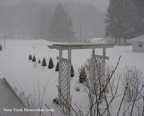 SnowyArbor2