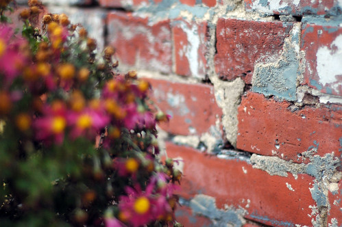 flowers against patched brick