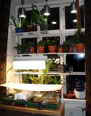 My growing window