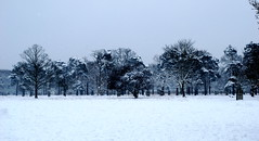 Snow covered trees Richmond Park