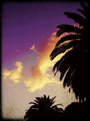 purple sky and black palms (Selex*23) Tags: sky italy black clouds palms purple genoa