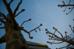Stuggi Trees