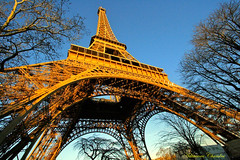 Magnificent of the Eiffel Tower