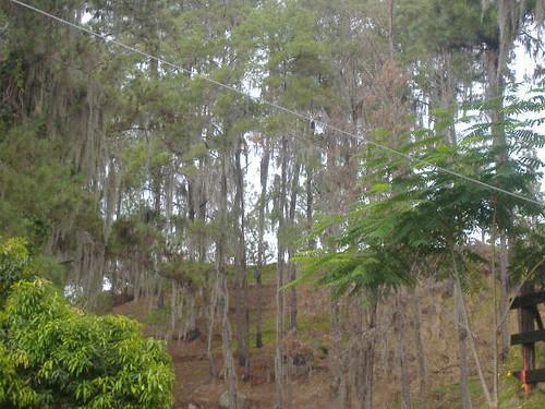 Parque J Armando Bermudez