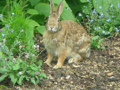 Conejo en el Brooklyn  Botanical Garden