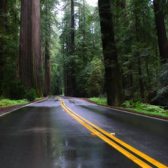 Rainy day... (Kat...) Tags: california road tree geotagged route redwood sequoia humboldtcounty californie avenueofthegiants 500x500 240x240 winner500 geo:lat=40277823 geo:lon=123887672