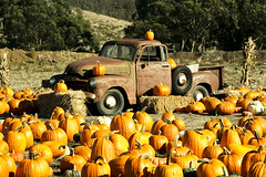 Pumpkin Truck (jordan breckenridge) Tags: ca autumn orange usa fall truck pumpkin stem rust harvest halfmoonbay