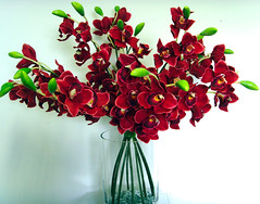 Product 1 (forgetmenot2008) Tags: flowers red green glass floral orchids stems bunch vase arrangement