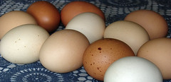 Wil-Moore Farms eggs.