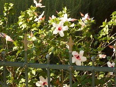 flowers in bahai Garden