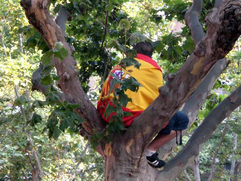 spain-in-a-tree