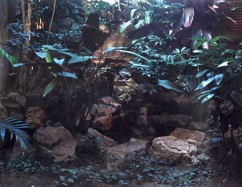 cascada salvaje