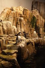 Pinguini (Davide78) Tags: canada montreal viaggi pentaxmz5n