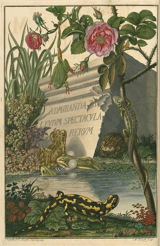 Historia naturalis ranarum nostratium 1758 (frontispiece)