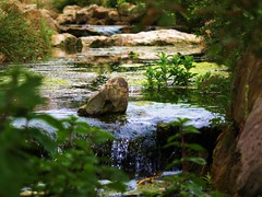 Harmony (Andy von der Wurm) Tags: nature water stream wasser natur peaceful bach harmony harmonie friedlich inspiredbylove dierenparkemmen hobbyphotograph zooemmen andreasfucke