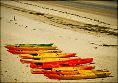 Je monte la garde ......  ;-)) (lo46) Tags: chien france beach photography couleurs live blues passion ericclapton plage arcachon musique guitare aquitaine cano gironde lo46 bassindarchachon