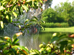 Charlotte Was Here! (linda yvonne) Tags: reflection green pond bokeh web avantgarden naturesfinest overlandparkarboretum lovelyview interestingness170 i500 charlotteacavatica dewspangled theoverlandparkarboretumandbotanicalgarden opabg