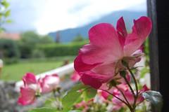 Ore - jardin - fleur