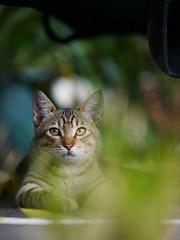 攝影:貓草天空的胖子