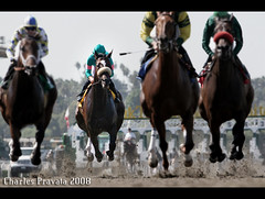 Zenyatta; still perfect. (alydar_1978) Tags: california mike cup moss mare smith stakes distaff breeders undefeated streetcry pravata zenyatta shireffs zenyattahorse zenyattaimages zenyattaphotos zenyattaracehorse
