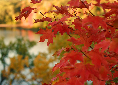 Fall Leaves by tboard.
