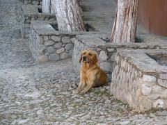 Dog (Kurazaybo) Tags: dog pueblos sanluispotosi perropueblo