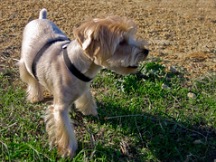 Descanso / Rest stop (Nhelios) Tags: portrait dog pet animal europa retrato andalucia perro cadiz animales algeciras centenario exteriores campodegibraltar espaa otoo