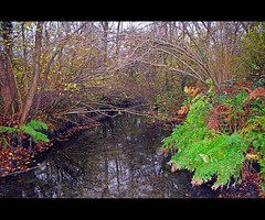 Autumn in the woods (Explore) (alfvet) Tags: nature nikon natura autunno d60 naturesfinest boschi parcodelticino veterinarifotografi bestflickrphotography vosplusbellesphotos